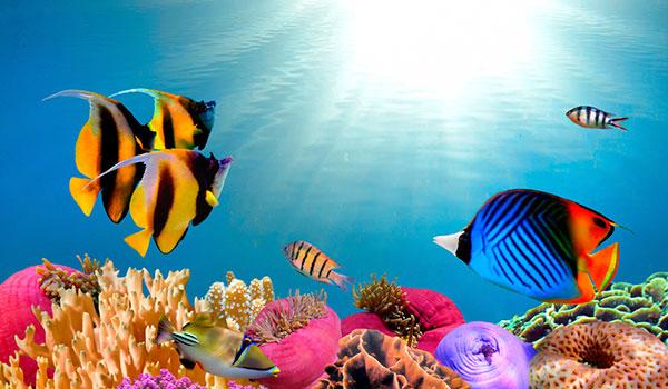 Панно под водой