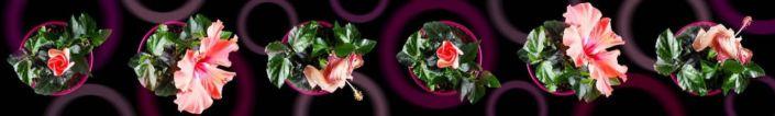 фартук для кухни цветок китайской розы