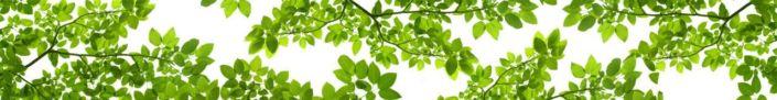 фартук для кухни ветки деревьев с зелёными листьями