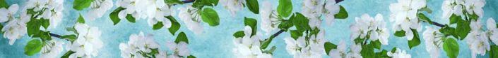 фартук для кухни белые цветки яблони на голубом фоне