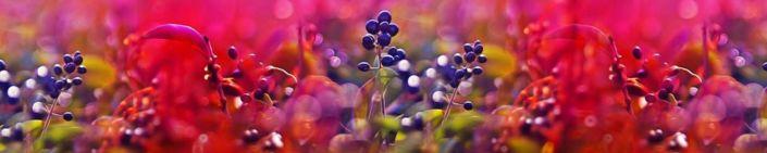 фартук для кухни цветы полевые