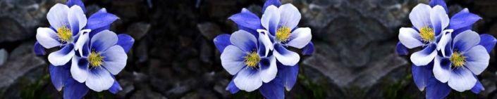 фартук для кухни синий цветок на чёрном фоне
