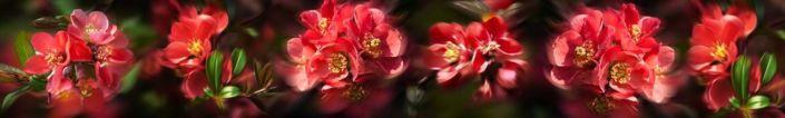 фартук для кухни красные цветы
