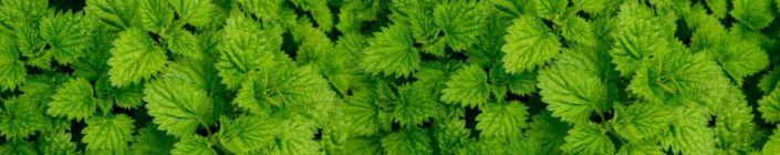 фартук для кухни листья крапивы