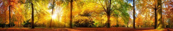 фартук для кухни солнечный осенний лес