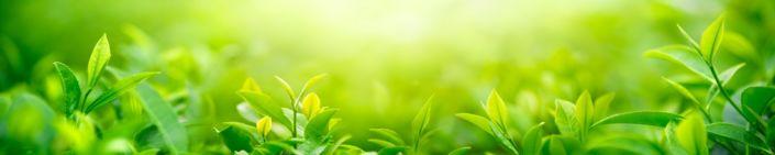 фартук для кухни зелёные листья в солнечных лучах