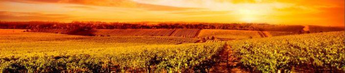фартук для кухни долины виноградников янтарный восход солнца