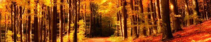 фартук для кухни ый осенний лес