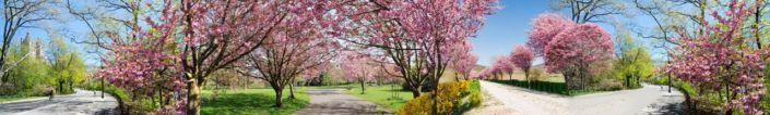 фартук для кухни cад с розовыми деревьями