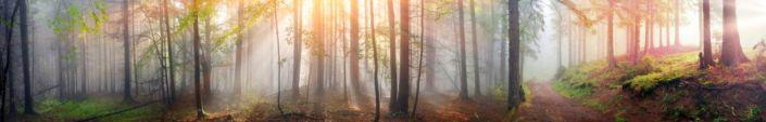 фартук для кухни лес в солнечных лучах