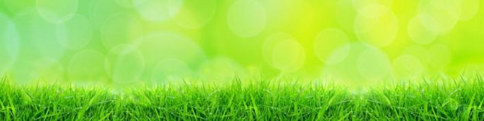 фартук для кухни трава и солнечный день