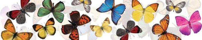 фартук для кухни бабочки разноцветные