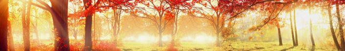 фартук для кухни солнечная осень в красках
