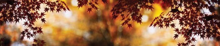 фартук для кухни осенние листья красный клён