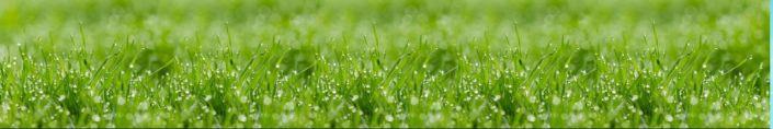 фартук для кухни капли росы на траве