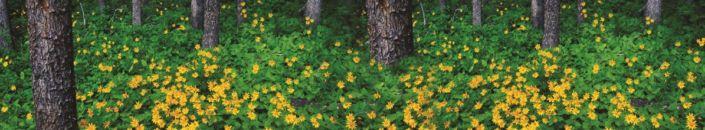 фартук для кухни жёлтые цветки в лесу