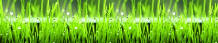 фартук для кухни трава зелёная с каплями росы