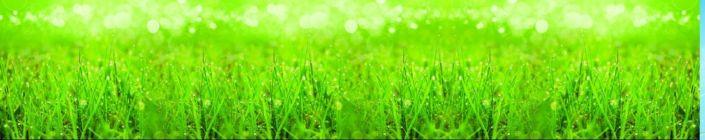 скинали для кухни трава с росой в солнечных лучах