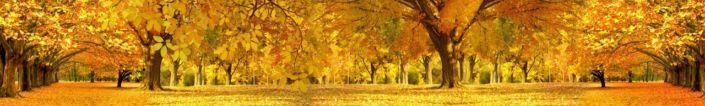 фартук для кухни красивый жёлтый осенний парк