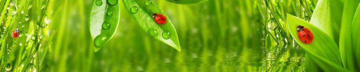 скинали для кухни листья трава вода божьи коровки