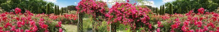 фартук для кухни сад роз