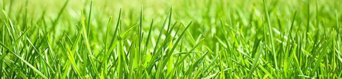 скинали для кухни трава солнечный день