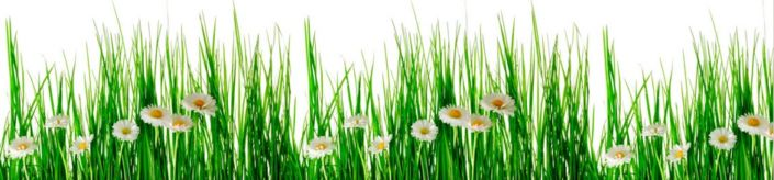 скинали для кухни трава ромашки на белом фоне