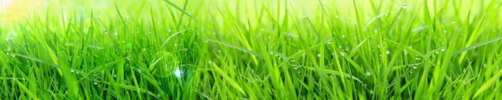 скинали для кухни трава рорса солнечный день