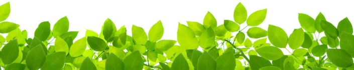 фартук для кухни листья зелёные на белом фоне