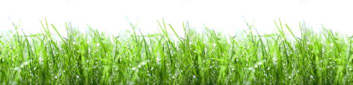 скинали для кухни роса трава поле