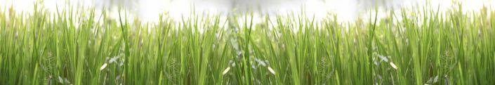 скинали для кухни трава в поле