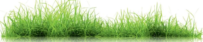 скинали для кухни трава и отражение