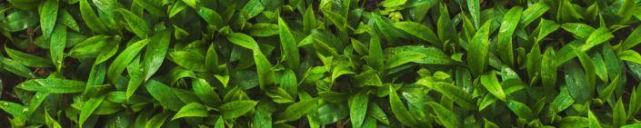 фартук для кухни листья зелёные