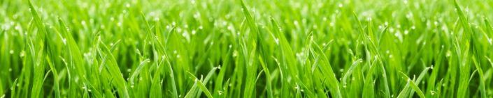 скинали для кухни роса на траве