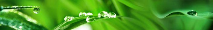 скинали для кухни роса трава на зелёном фоне