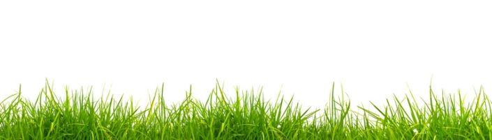 скинали для кухни трава зелёная на белом фоне