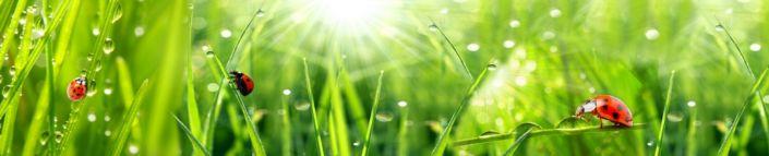 скинали для кухни трава роса солнечный день