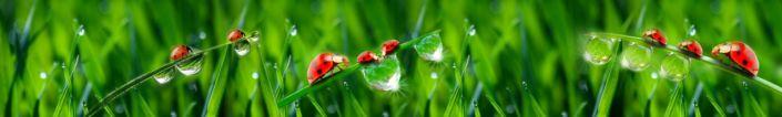 фартук для кухни божьи коровки роса трава