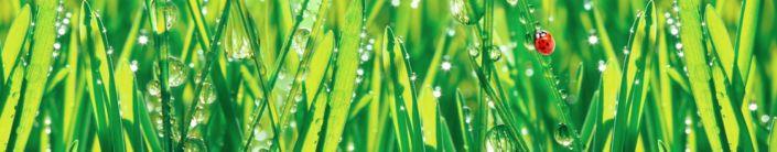 фартук для кухни трава капли росы божья коровка