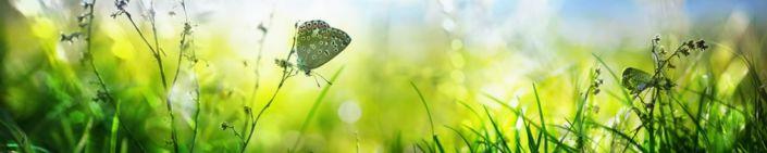 фартук для кухни трава бабочки солнечный свет