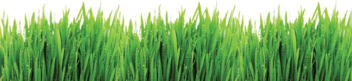 фартук для кухни трава с росой