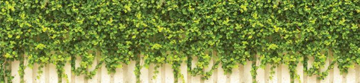 фартук для кухни вьющиеся растения на белом заборе