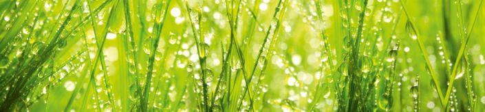 фартук для кухни трава солнечный свет капли росы